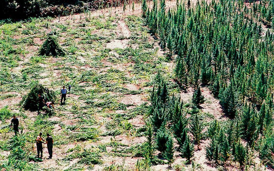 H πολύμηνη μυστική έρευνα της ΕΛ.ΑΣ., που ολοκληρώθηκε τον περασμένο Μάιο, είχε αποκαλύψει τα σχέδια για εξαγωγή 650 κιλών χασίς από την Αλβανία στη Νορβηγία.
